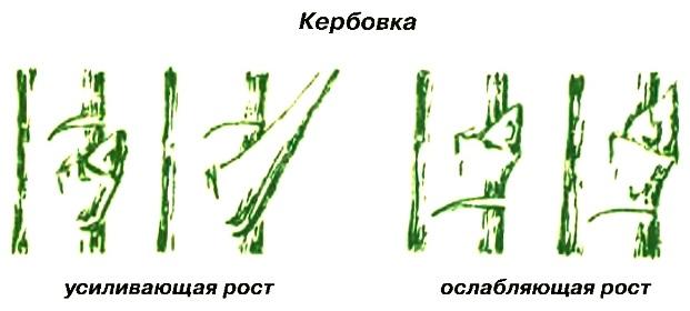 Кербовка