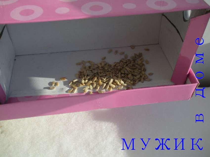 кормушка для птиц из обувной коробки