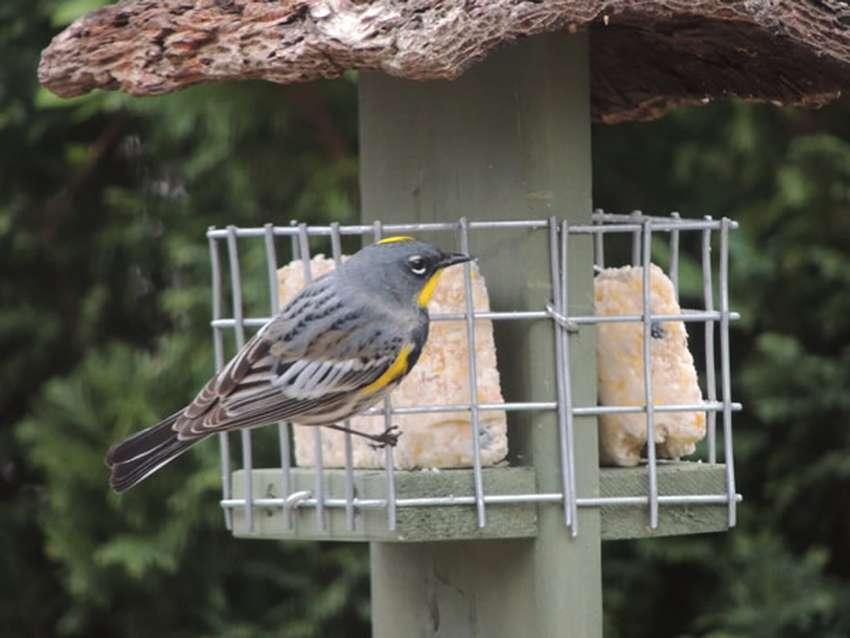 кормушка для птиц под сало