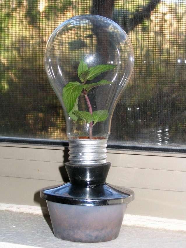теплица в лампочке