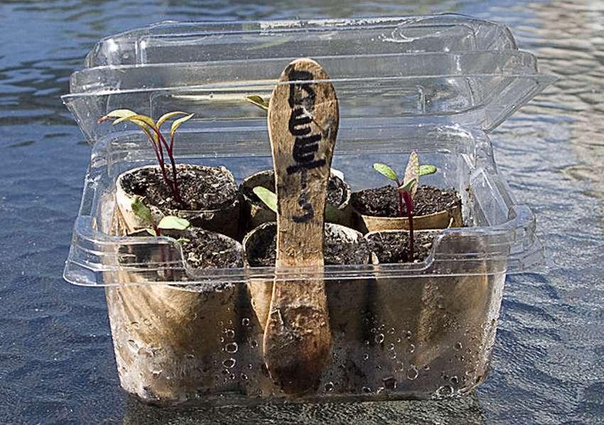 микропарник для семян