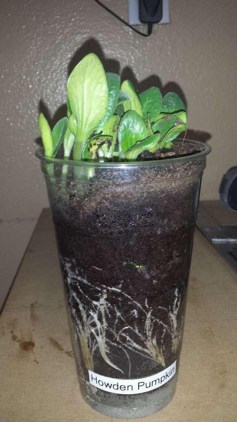 мини парник для семян