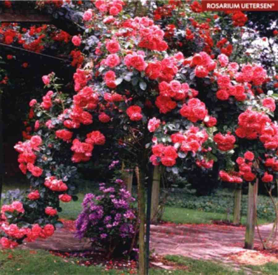 штамб для розы из чего